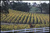 Shenendoah Valley wineries