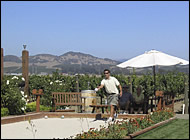 wineries with bocce ball courts