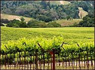 which california wine country