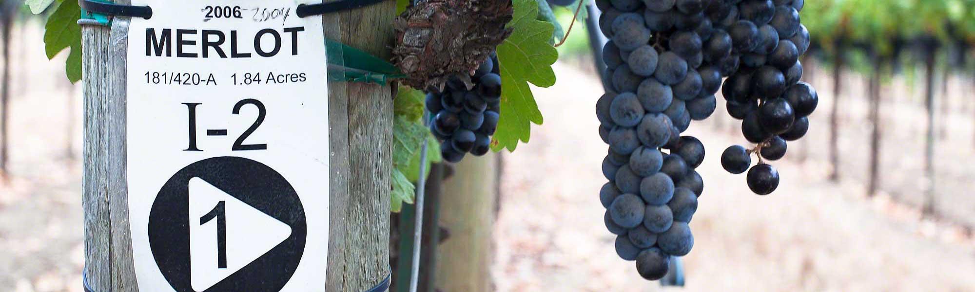 Top Wine Tasting Rooms In Los Olivos Wine Country Getaways