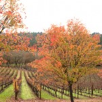 napa valley thanksgiving