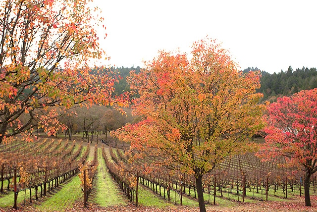 napa valley thanksgiving