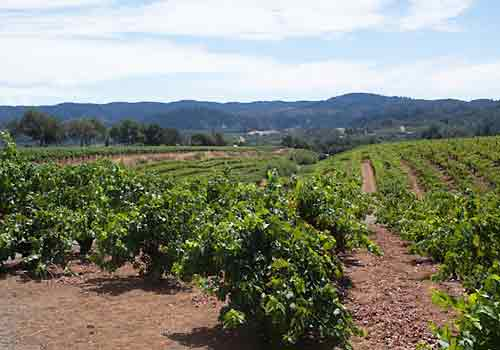 Red soil of the east bench land of Dry Creek Valley