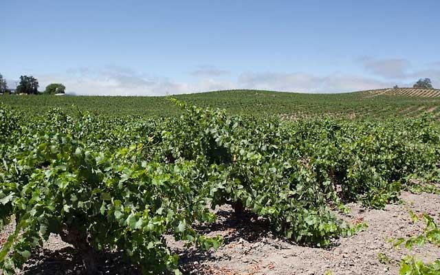 dusi vineyards