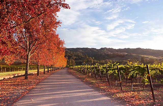 October in wine country