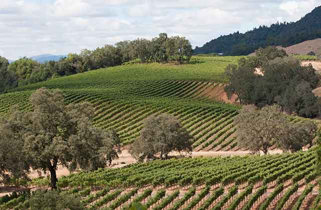 Mustard season in wine country - Wine Country Getaways