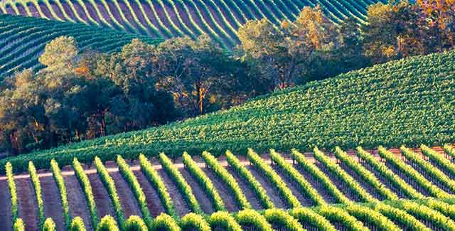 Introduction to California wine country