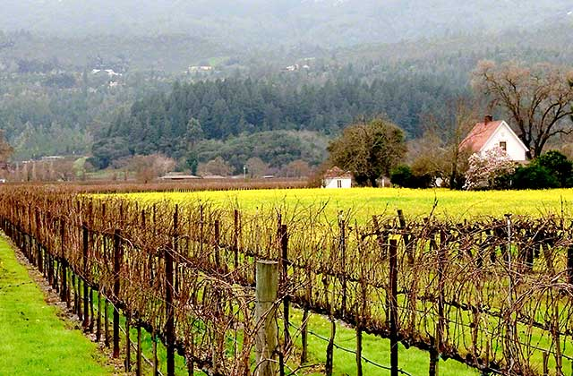 January in wine country