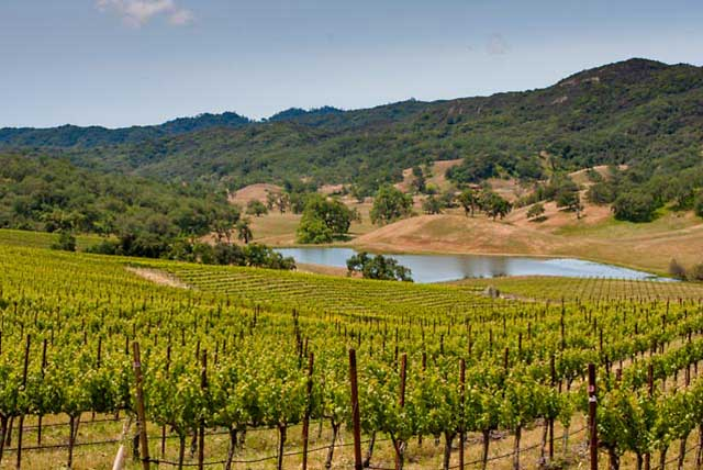 Wine Country Backroad Vineyard Drive Paso Robles